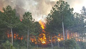 Durağan'da Günlerce Süren Orman Yangınının Ağır Bilançosu Açıklandı !